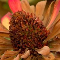 Как собрать и сохранить семена цветов (видео)