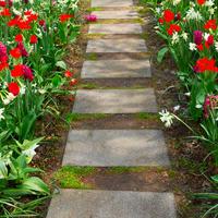 Как посадить тюльпаны и нарциссы (видео)