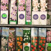 Как сохранить саженцы, купленные не в срок: советы от Юлии Миняевой