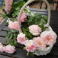 Несравненные шрабы: особенности выращивания и важный секрет цветения