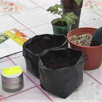 Посев огурцов в полиэтиленовые мешочки