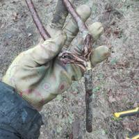 Наш утилизатор древесных отходов