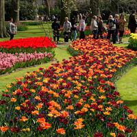 Парад цветов в парке Кёкенхоф. Часть вторая