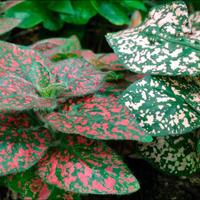 Как называется эти растения?