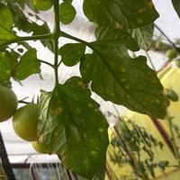 Домашняя работа №7. От чего и как защитить огородные культуры