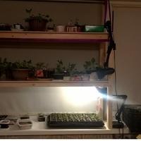 Домашнее задание №8: выращивание рассады