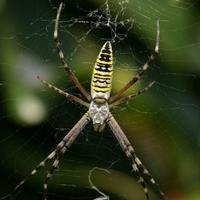 Что это за паук? Полезный или вредный?