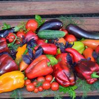 Выращивание сладкого перца в теплице. Записи дилетанта. Дневник