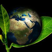 18 мая – международный День Растений