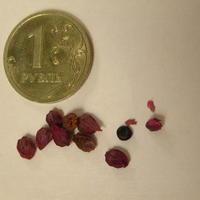 Определите цветок по фотографии его семян