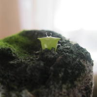 Как быстро растут кактусы, выращенные из семян?