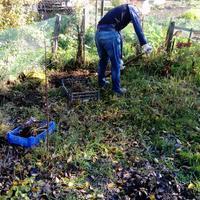 Посадила спирею Вангутта на клумбе слишком близко к тропинке. Что посоветуете сделать?