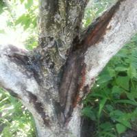 Помогите спасти деревья!