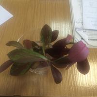 Помогите, пожалуйста, определить, что это за растения?