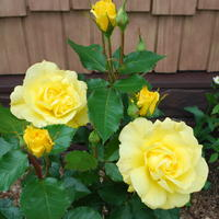 """""""Зимний домик"""" - надёжное укрытие роз!"""