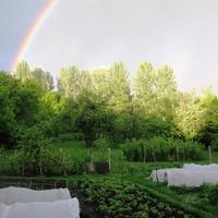 Организация огорода на деревенском подворье