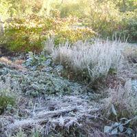 Первые осенние заморозки в октябре... (фотосет)