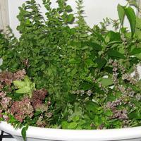 Ароматные травы - выращиваем, любуемся, сушим, а еще... настаиваем;-)