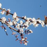 Цветы моего сада. В преддверии лета вспоминаю пролетевший май