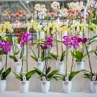 Приглашаем на выставку «Цветы/Flowers-2016» на ВДНХ