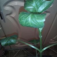 Почему свернулись листья у георгины?