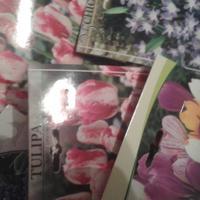Позднеосенняя посадка тюльпанов, крокусов, мускари