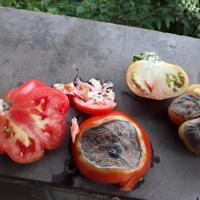 Помогите определить заболевание томатов