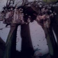 Подскажите, что за наросты на луковицах гладиолусов? Как их хранить?