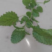 Какое это растение, как его использовать?