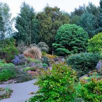 Тепло- и холоднорастущие декоративные злаки для вашего сада