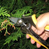 Секатор прямого реза PALISAD. Обрезка зелёных стеблей растений и подведение итогов тестирования