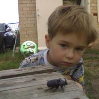 Что это за жук? Это вредитель?