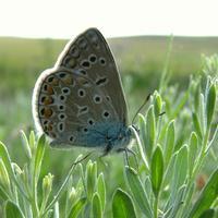Как называется бабочка? Вредит ли она?