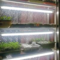 Как я выращиваю рассаду в домашних условиях и в теплице