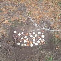 Посадила тюльпаны в феврале. Как помочь им нормально цвести и не потерять силы для следующего года?