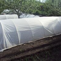 Моё тестирование. Парники «Удачный сезон», «Подснежник» и «Удачный урожай» - развитие растений
