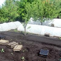 Моё тестирование. Парники «Удачный сезон», «Подснежник» и «Удачный урожай» - общая картина на начало лета