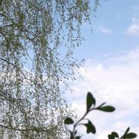 """Лаванда """"Сиреневый туман"""".  Когда мечта становится реальностью)))"""