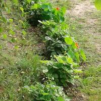 Домашнее задание №2: мой огород