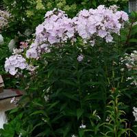 Падалица: применение с пользой для сада