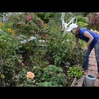 Чем подкормить розы в сентябре