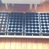Поделитесь опытом по выращиванию и пересадке рассады