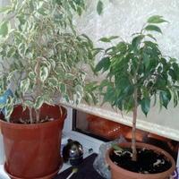 Полила растения крепким раствором марганцовки. Что теперь с ними будет?