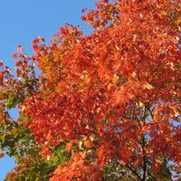 Осень - золотые листопады, ничего другого мне не надо!