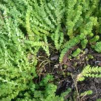 Что это за растение? Нужно ли его удалять?
