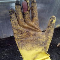 Какие перчатки выбрать для садово-огородных работ?