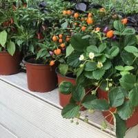 Домашний огород - чудо на дому!