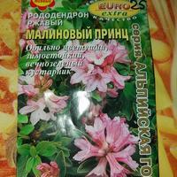 Как посадить рододендрон в домашних условиях?