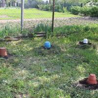Удастся ли мой эксперимент по выращиванию тыкв?