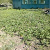 Весенние хлопоты в нашем огородике))) Клубника